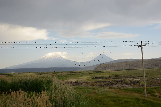 3-Antoinette-Nausikaa--Birds-on-a-wire_Ararat-2014