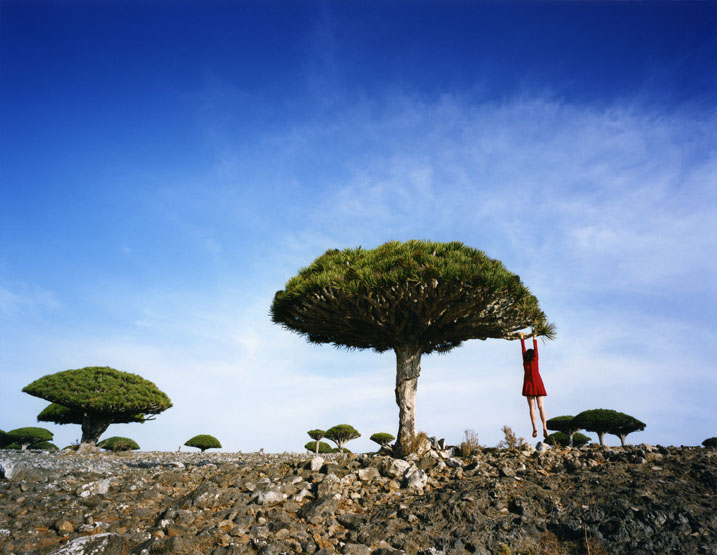 Scarlett Hooft Graafland, We Like Art, Dragon's Blood